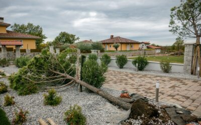 How to Protect Landscaping from Hurricanes