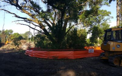 6 Things You Need to Know About Land Clearing