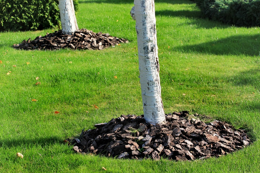 Why Volcano Mulching Does More Harm Than Good