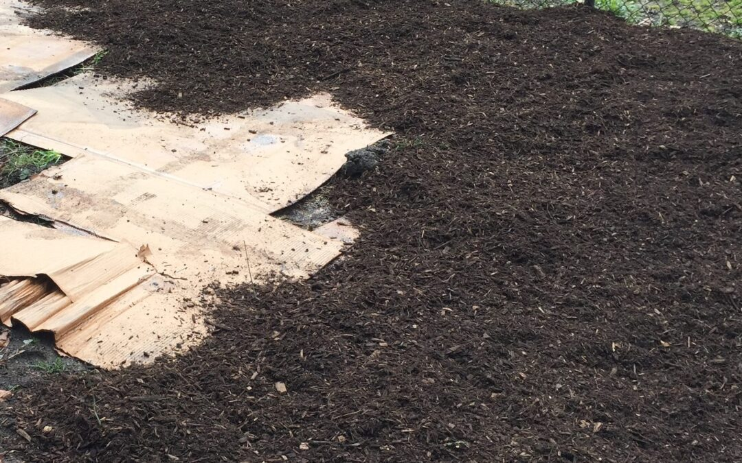 Don't want to dig up your yard? Try sheet mulching!